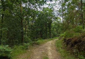 Part of my track through the forest.