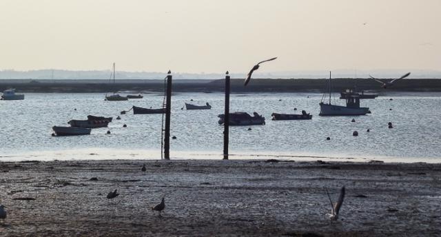Essex Mersea boats