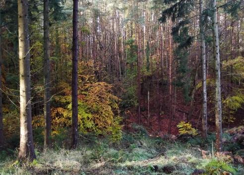 autumnwalk3