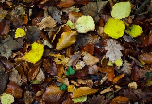 autumnwalk8-2
