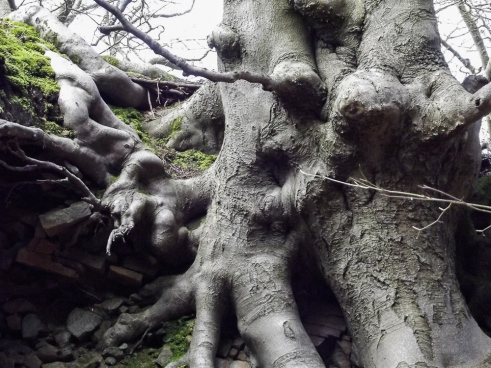 2.18old roots