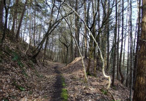 2.4wilder woods