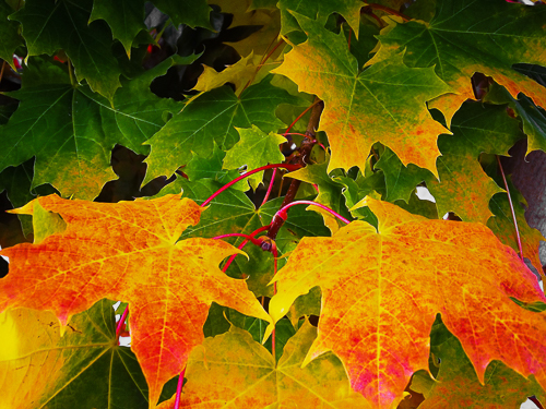 zThe Bright Promise of Autumn